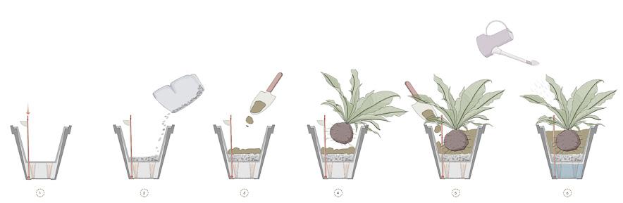Hướng dẫn sử dụng chậu cây tự dưỡng