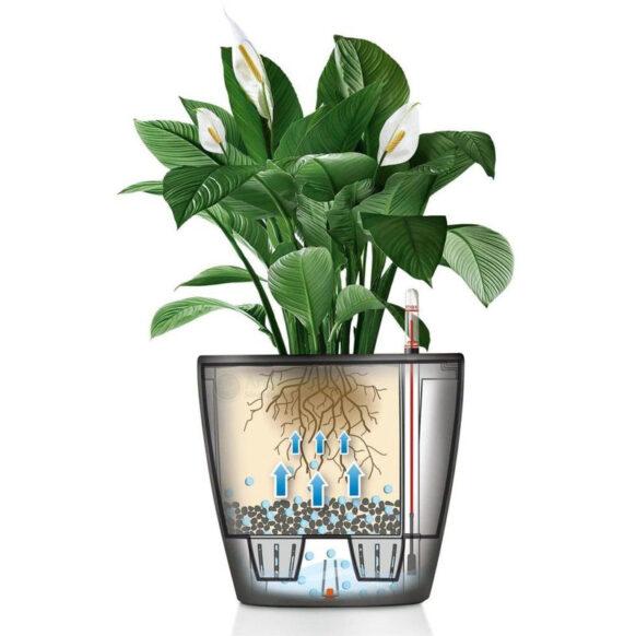 Đặc điểm của chậu cây tự tưới nước